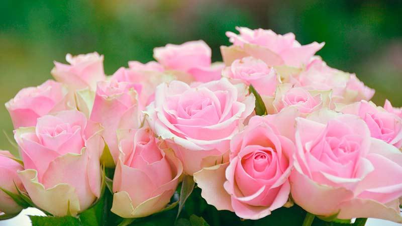 Flores Frescas Lima