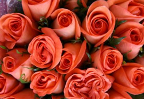 flores frescas santiago